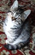 Отдам котенка в хорошие руки,3,5 месяца, игривый, любопытный, очень умный