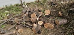 Отдам бесплатно дрова (свежеспиленный вяз) Центральный р-н