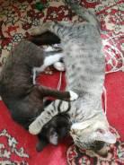 Кошки коты котята