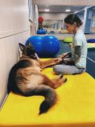 Фитнес для собак и реабилитация