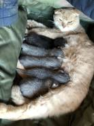Отдам хорошеньких котят