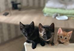 Три прелестных домашних котенка ищут любящую семью. Кошки