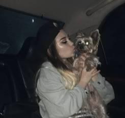 Потерялась собака.