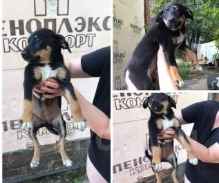 Черный щенок 2 месяца