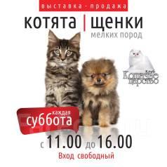 Выставка продажа котят и щенков мелких пород.