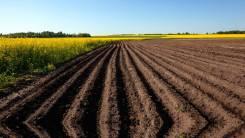 Земельный участок сельскохозяйственного назначения 30 га Ханка. 300 000кв.м., собственность. Фото участка