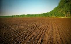 Земельный участок сельскохозяйственного назначения 9 га Ханка. 90 000кв.м., собственность. Фото участка