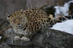 Земля леопарда.