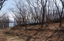 Земельный участок у моря. 1 091кв.м., аренда, электричество. Фото участка