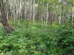 Продам земельный участок площадью 1 гектар. 10 181кв.м., аренда, электричество