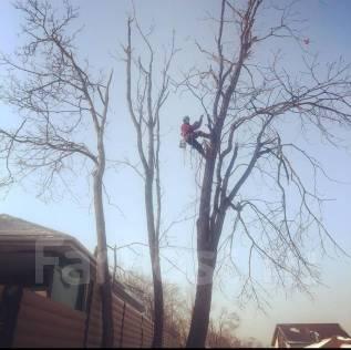 Спилить дерево, спил деревьев, Лесорубы, Расчистка участка