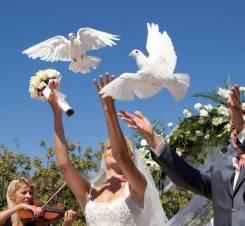Голуби на свадьбу, выпускные и праздники
